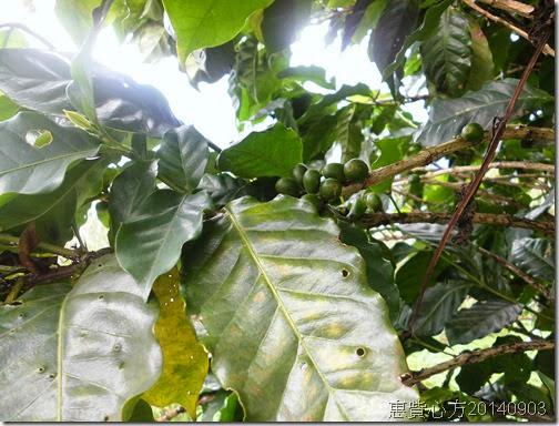 CIMG2165咖啡豆