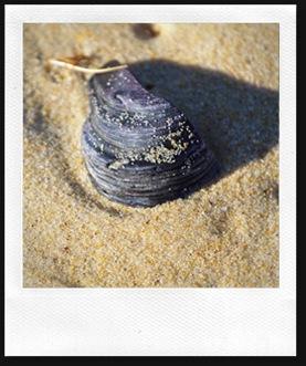 shell8
