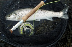 Sea trout fishing wexford