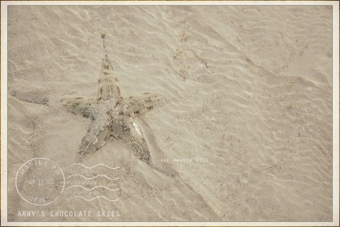 sand-colored sea star