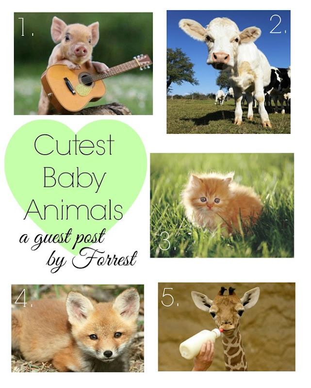 cutest baby animals by forrest