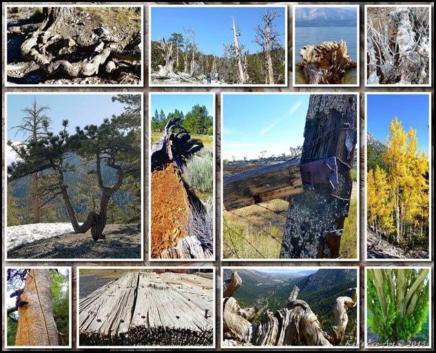 2012 Tree Textures 01
