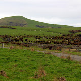 Green Rolling Hills of Sheep and Farmland - Catlins, New Zealand