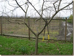 a well-shaped fruit tree