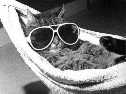 cat-with-sunglasses-lying-in-a-hammock-r-diger-poborsky-200540