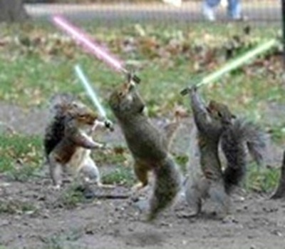jedi_squirrels_thumb_thumb