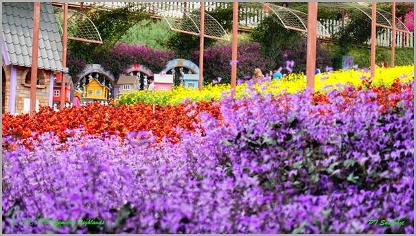 红黄紫色的花海
