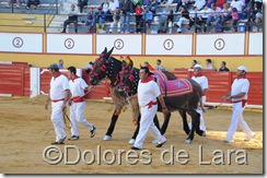©Dolores de Lara (43)