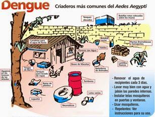 Se intensifican las tareas de prevención contra el mosquito que transmite el Dengue