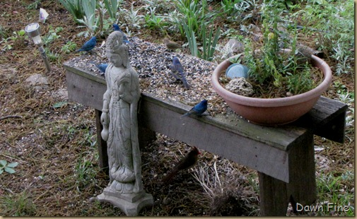 spring birds_090