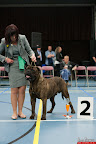 20130510-Bullmastiff-Worldcup-0386.jpg