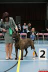 20130510-Bullmastiff-Worldcup-0386.jpg
