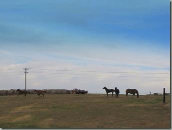 herd integration 062