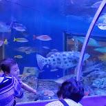 underwater tunnel at the Shinagawa Aquarium in Shinagawa, Tokyo, Japan
