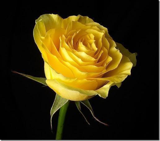 san valentin flores (17)