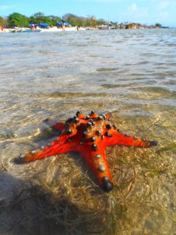 burot_beach_batangas_trip_angelomesa_2014 (89)