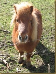IMG_0814 Pony