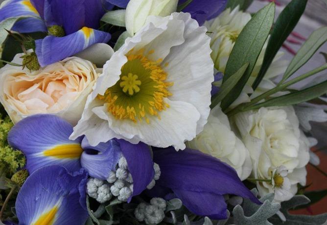 217697_10151152467460152_1672381807_n flora organica designs