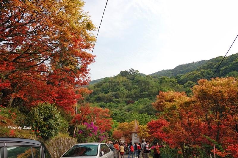 陽明山 台北奧萬大 平菁街 楓葉