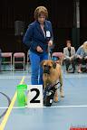 20130511-BMCN-Bullmastiff-Championship-Clubmatch-1534.jpg