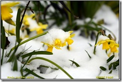 Brandon Marsh - Light snow