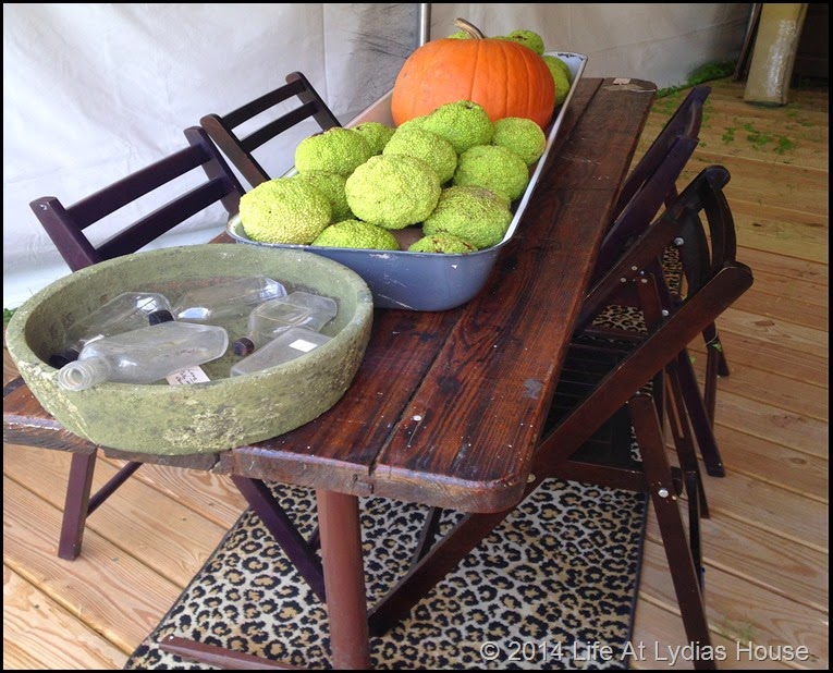 Round top table centerpiece with pumpkin and osage oranges via Life At Lydias House