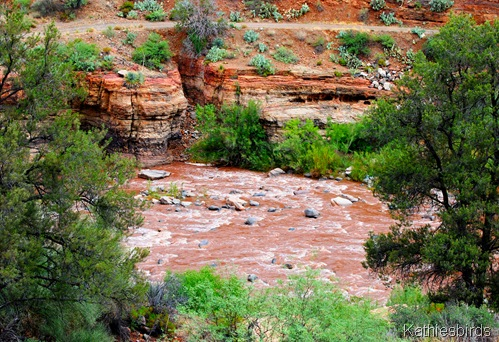 DSC_0004 salt river-kab