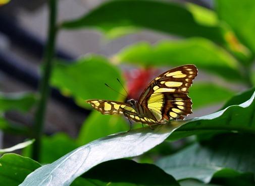 2013-07-05 butterfly pavilion (114)