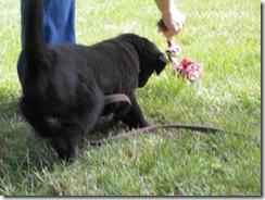 puppy 05