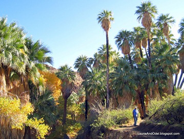 Odel on the Palm Trail