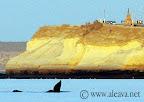 Avistaje de Ballenas Cerca de Puerto Madryn Península Valdes Slideshow