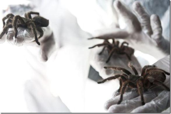 spider-farmer-juan-14