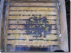 potopa včeliček 20,02,2012 044