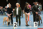 20130510-Bullmastiff-Worldcup-1121.jpg