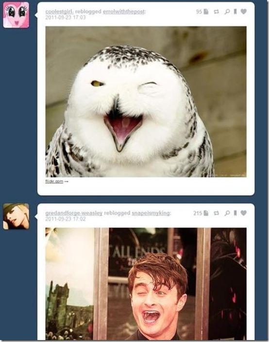 funny-tumblr-replies-24
