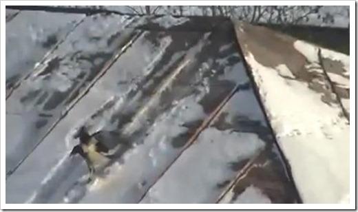 Crow roof tubing 03