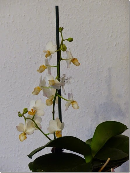 2014_09 Orchis (2)