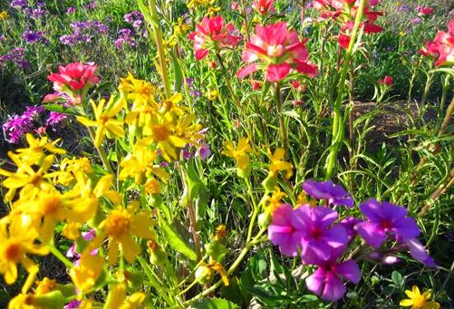 wild flowers (17)