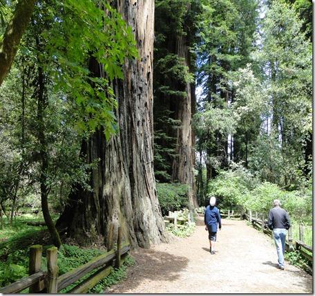big trees 073