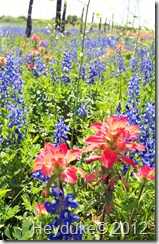 paintbrush and bluebonnets