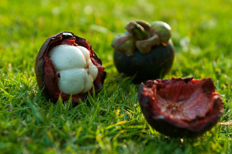 тайский фрукт мангустин