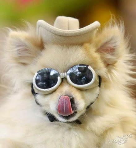 Собака в шляпе и в очках