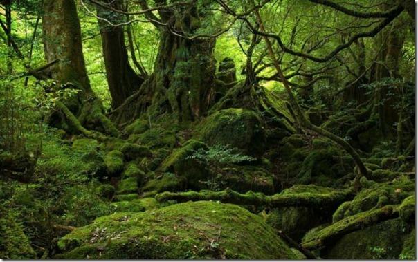 floresta no japão (7)