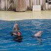 Boudewijn Seapark-039.JPG