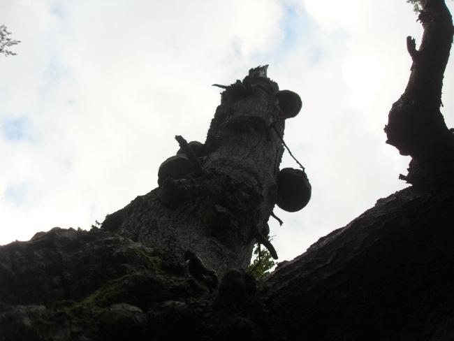 langt ude i skoven - Farum juli 2012