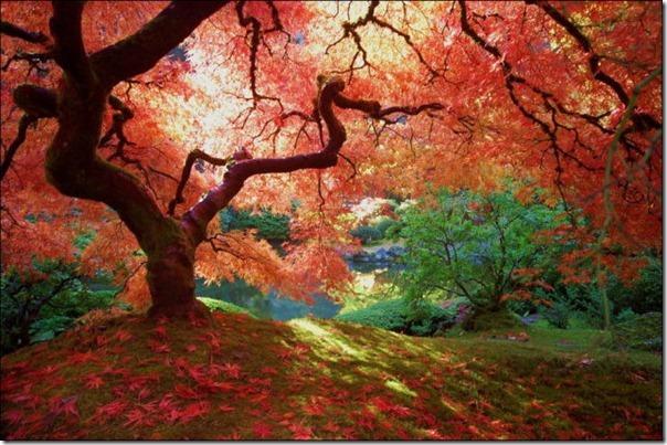 Lindas imagens de folhas do outono (8)