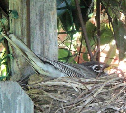 birdmom6