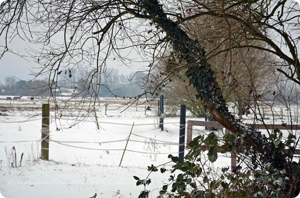 Schneesonntag 20zwölf (12)