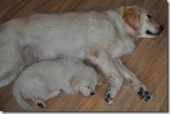 Mor og sønn