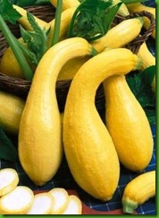 EARLY GOLDEN CROOKNECK SQUASH